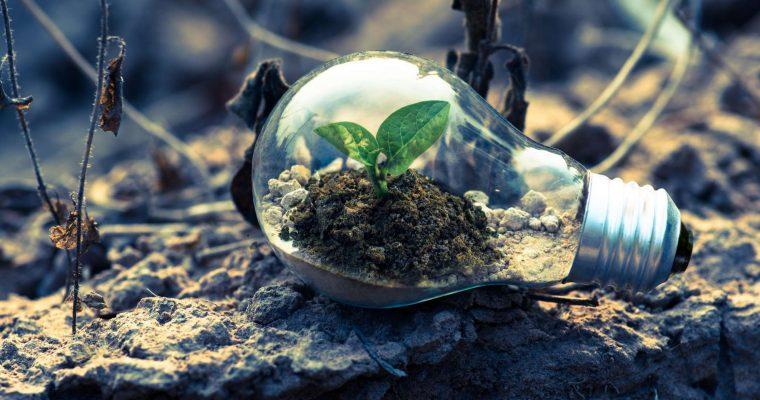 Energie uit biomassa: wel of niet duurzaam?